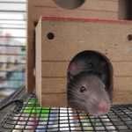 top 10 pest control companies in london