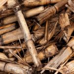 The Introduction of Sugarcane Polyolefin Materials